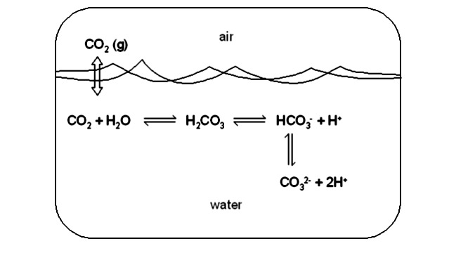 A section of the carbon cycle showing the process of ocean acidification where excess carbon dioxide in the air is absorbed into the ocean. From a lecture by Dr. Chris Paradise.