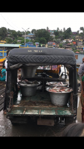 Fish being carted away at the Port Blair Fish Landing Centre, Andaman Islands. Photo by Amy Brooks.