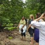 Mangrove day walk. You can see one of the types of mangrove roots, prop roots around our feet. Photo by: Heather Lowe
