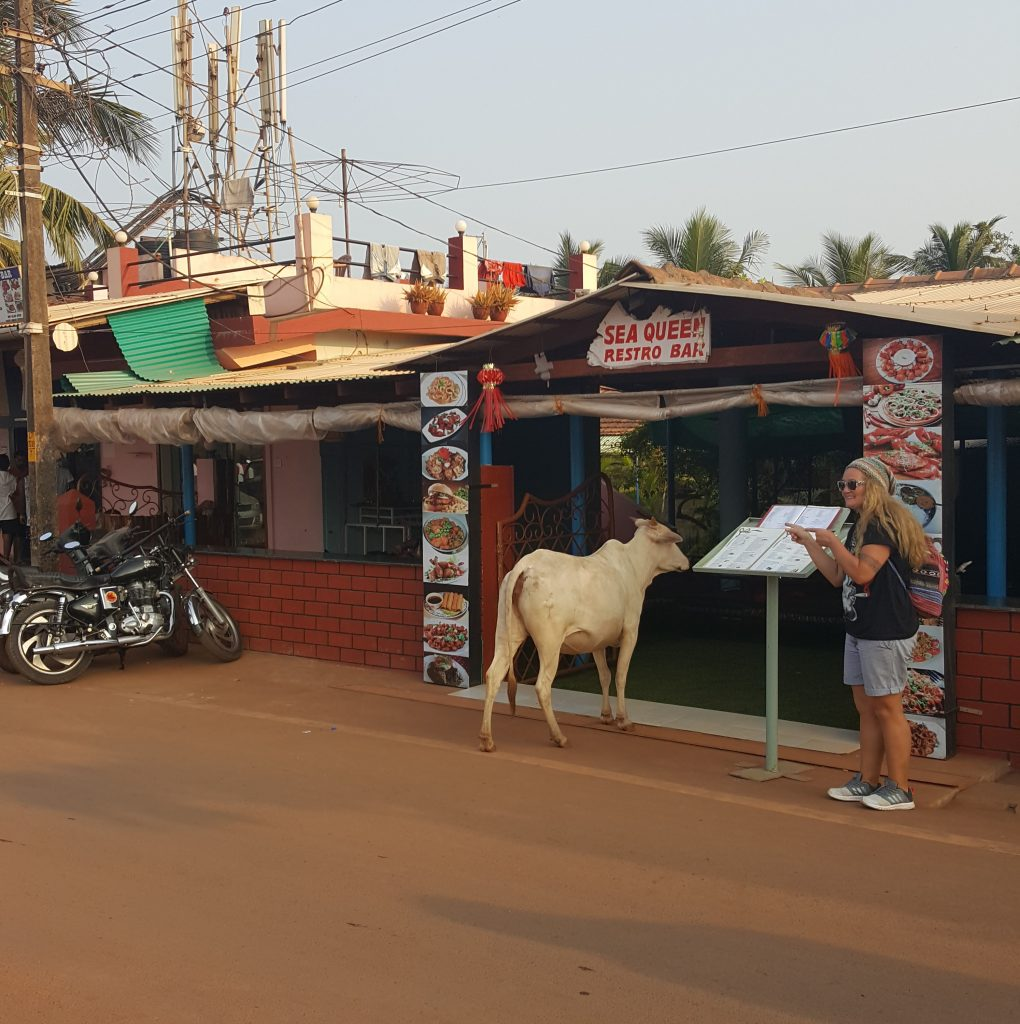 Cow poised to go into some restaurant in Goa